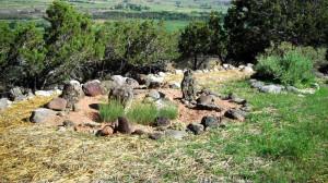 Cactus Garden Amidst Native Prarie Landscaping