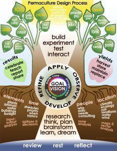 A diagram depicting the permaculture design process.