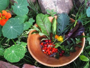 A bowl of berries and vegetables harvested from the forest garden.