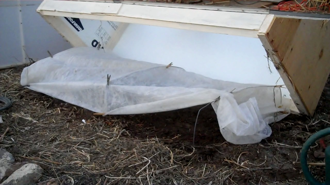 Remay fabric on a wire frame inside a cold frame