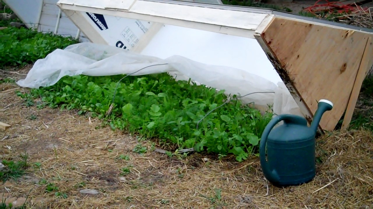 A double layer cold frame full of greens