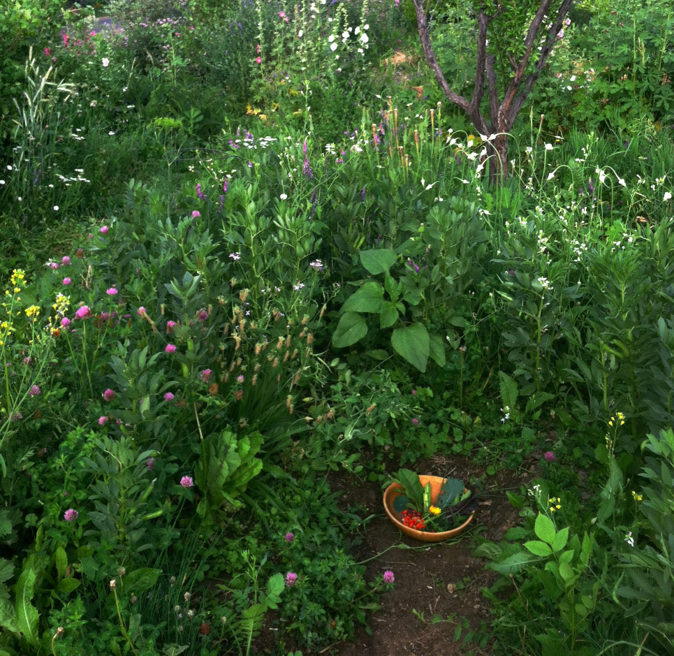 Forest Garden Western Colorado