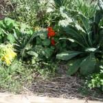 3 months later, a thriving garden