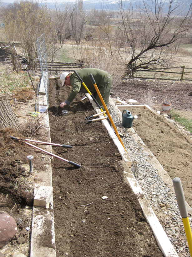 Planting the new gardens beds.