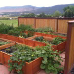 Container garden beds growing and overflowing.