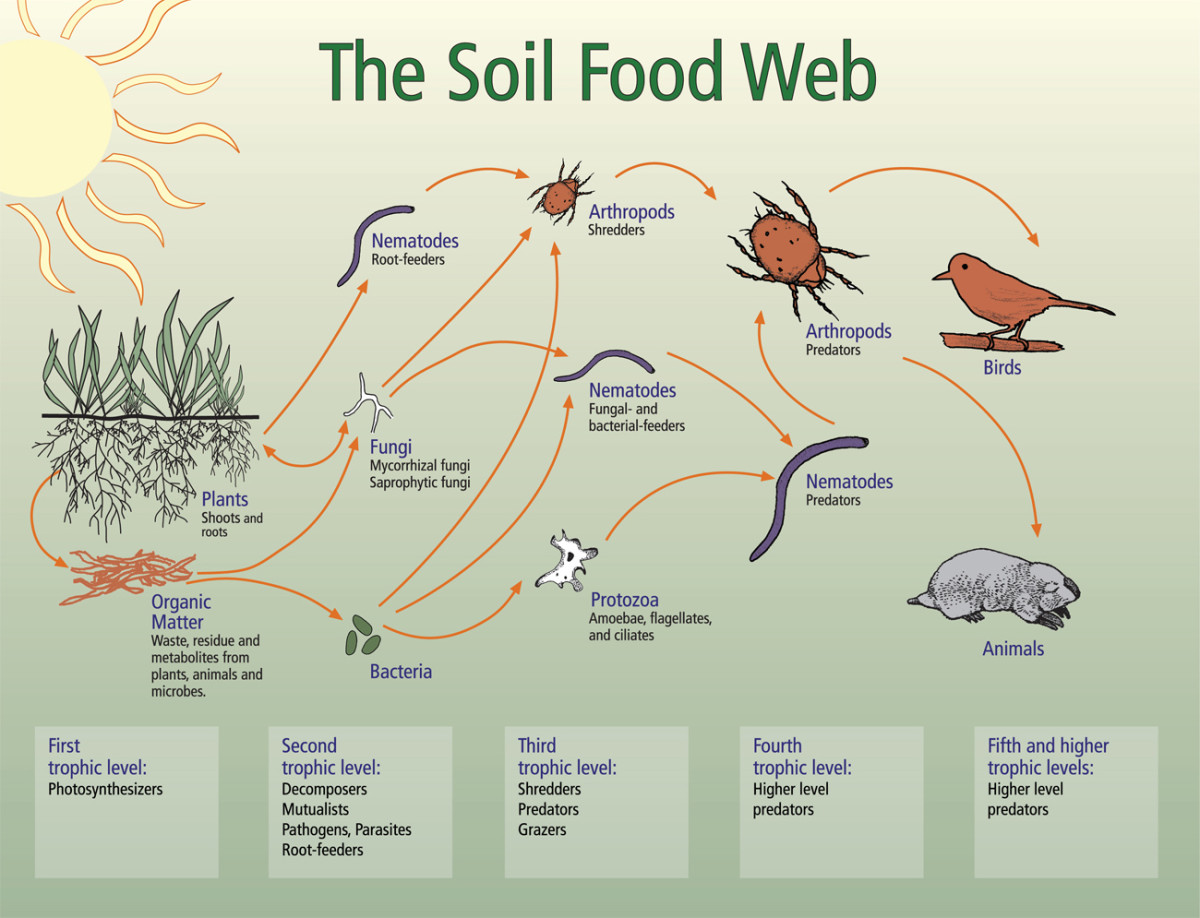 How to build soil like nature does soil science basics for Soil life cycle